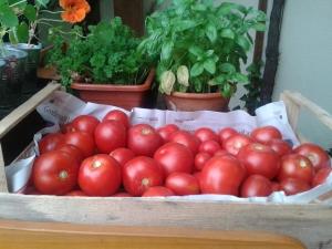 Tomatenkisterl