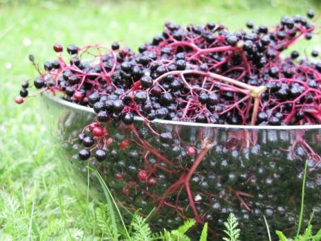 Holler schwarz für Marmelade 2