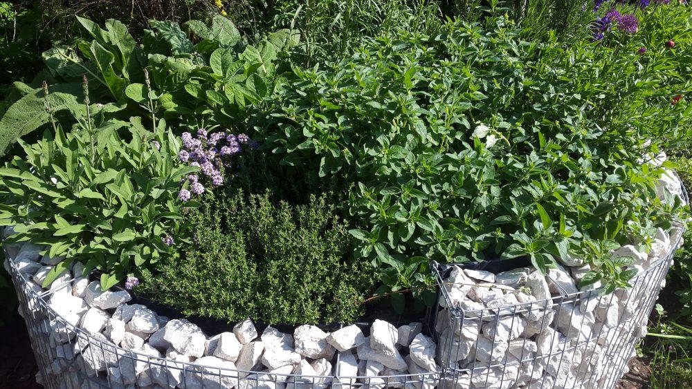 kräuterschnecke bepflanzungsplan