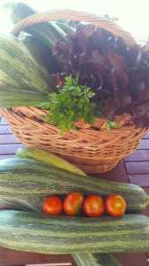 Zucchini Ernte aus Omas Garten